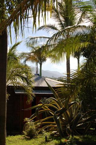 Photo Baobab et Palmiers