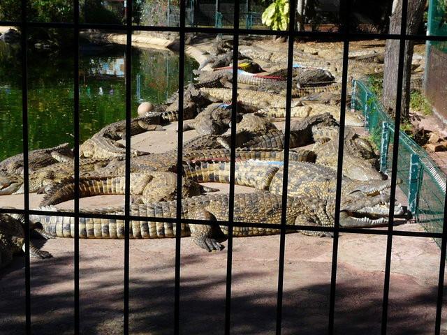 Photo Croc Parc