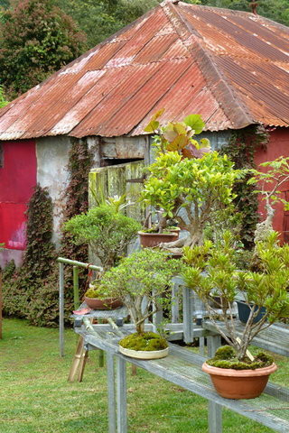 Photo Jardin de Bonsaïs