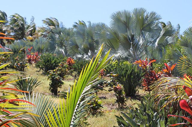 Photo Domaine des Mille Cocos
