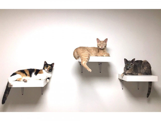 Photo Matouccino Cat Café